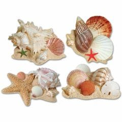 Seashell Cutout Decorations (Pack of 4)